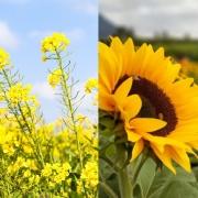 Aký rastlinný olej vybrať na vysmážanie, fritovanie alebo studenú kuchyňu?